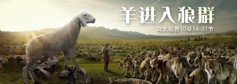 羊进入狼群